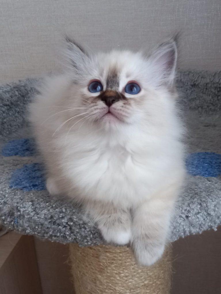 kHQfrSBP95k 768x1024 - Котята для вас