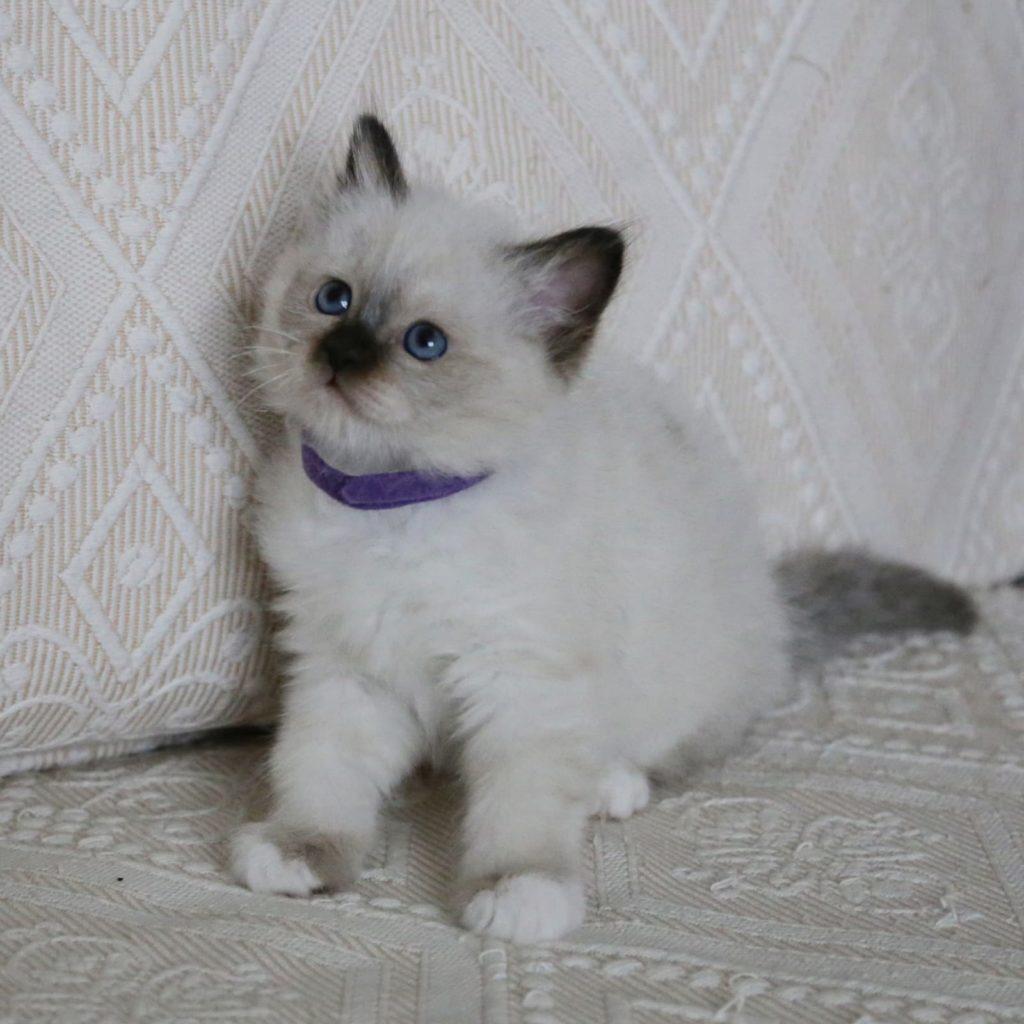NkZ9gmmbDe0 1024x1024 - Котята для вас