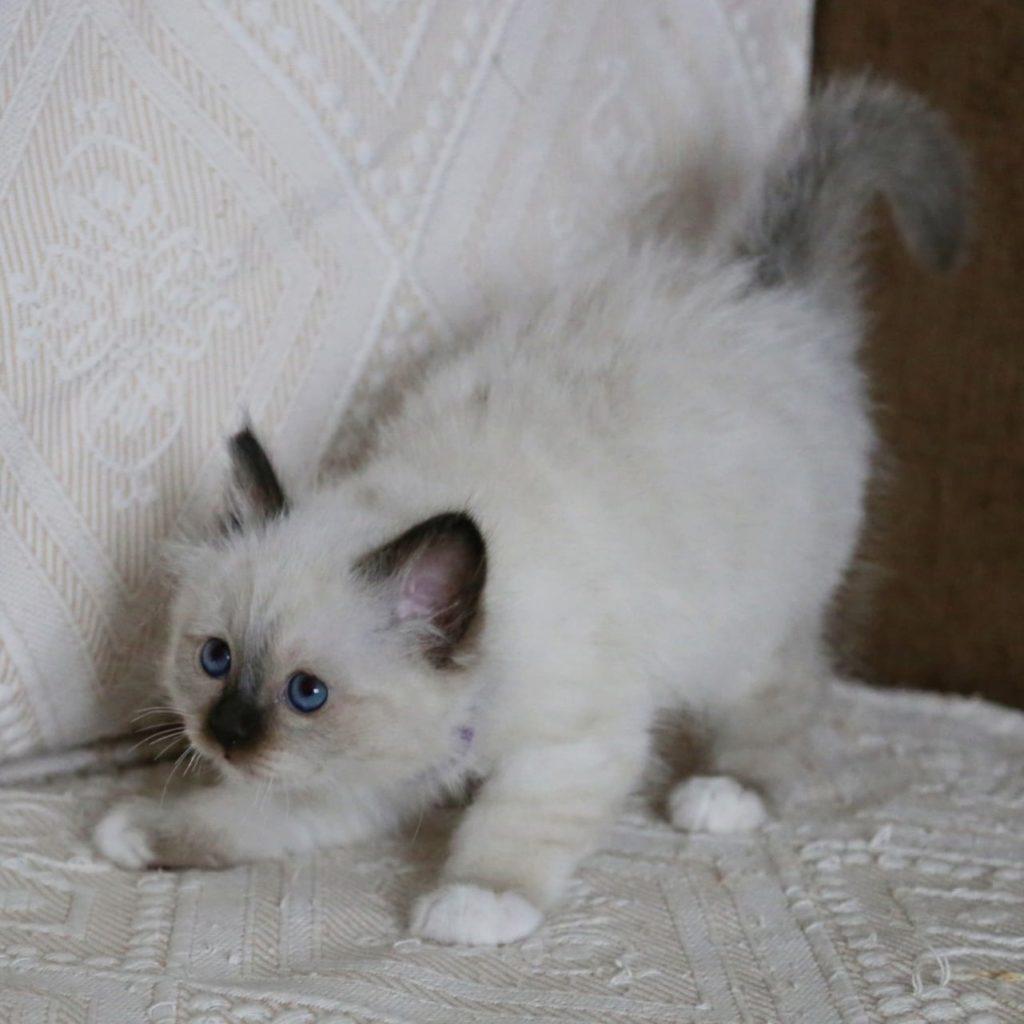 aOQkoz8VmWo 1024x1024 - Котята для вас